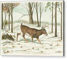 Deer In Snow Acrylic Print by Samuel Showman