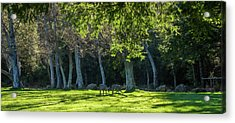 Deer In The Afternoon Sun Acrylic Print