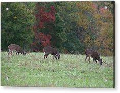 Deer In The Fall Acrylic Print by James Jones