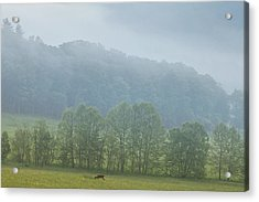 Deer In The Smokies Acrylic Print by Andrew Soundarajan