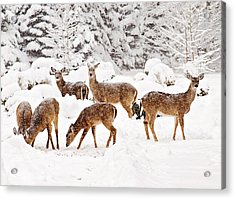 Acrylic Print featuring the photograph Deer In The Snow 2 by Angel Cher