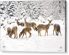 Acrylic Print featuring the photograph Deer In The Snow by Angel Cher