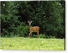Deer In The Woods Acrylic Print