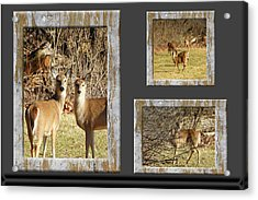 Deer Lovers Acrylic Print by Tina M Wenger