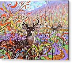 Deer Meadow Acrylic Print by Paul Breeden