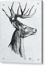 Acrylic Print featuring the drawing Deer by Michael  TMAD Finney