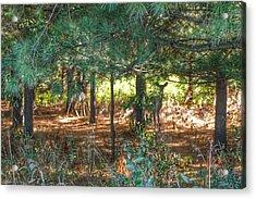 1011 - Deer Of Croswell I Acrylic Print