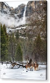 Deer Of Winter Acrylic Print