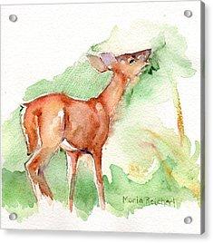 Deer Painting In Watercolor Acrylic Print