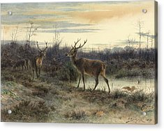 Deers In The Forest At Fontainebleau Acrylic Print