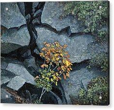 Defiance Acrylic Print by Paul Illian