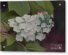 Deland Garden Gem Acrylic Print by Deborah Benoit
