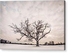 Acrylic Print featuring the photograph Delaware Park Winter Oak - Color by Chris Bordeleau