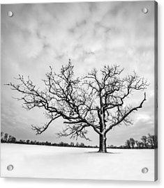 Acrylic Print featuring the photograph Delaware Park Winter Oak - Square by Chris Bordeleau