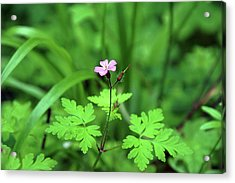 Acrylic Print featuring the photograph Delicate Beauty by Ben Upham III