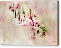 Acrylic Print featuring the photograph Delicate Bloom by Jessica Jenney