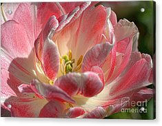 Delicate Acrylic Print by Diana Mary Sharpton