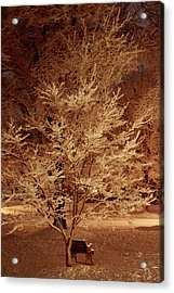 Delicate Dusting Acrylic Print by Charles Shedd