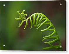 Delicate Fern Frond Spiral Acrylic Print