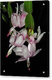 Delicate Floral Dance Acrylic Print