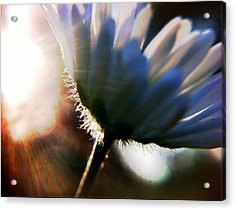 Delicate Flower Acrylic Print