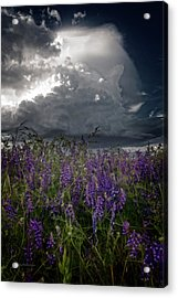 Delicate Flowers And Building Thunder Acrylic Print by Mick Anderson
