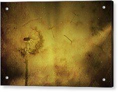Delicate Fly Away Acrylic Print