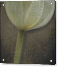 Delicate Goblet Acrylic Print by Kevin Bergen