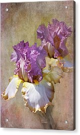 Delicate Gold And Lavender Iris Acrylic Print by Phyllis Denton