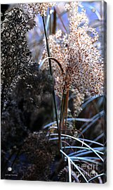Delicate Grass Plumes Acrylic Print