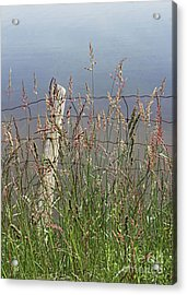 Delicate Grasses Along Fence Acrylic Print