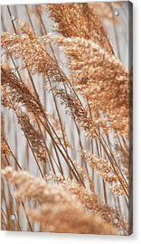 Delicate Grasses In Spring Acrylic Print by Christine Amstutz