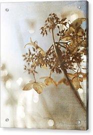Delicate Hydrangea Blossoms In Earth Tones Acrylic Print