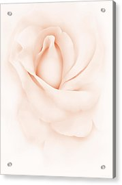 Delicate Peach Rose Flower Acrylic Print by Jennie Marie Schell