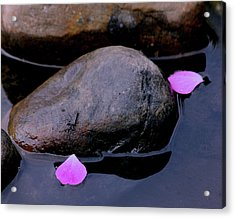 Acrylic Print featuring the photograph Delicate Petals With Rocks by Doris Potter