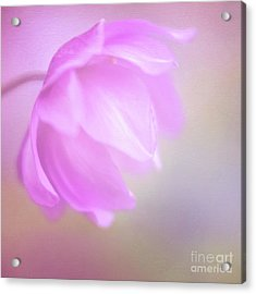 Delicate Pink Anemone Acrylic Print