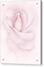 Delicate Pink Rose Flower Acrylic Print by Jennie Marie Schell