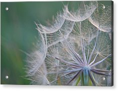 Acrylic Print featuring the photograph Delicate Seeds by Amee Cave