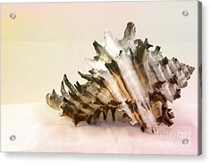 Delicate Shell Acrylic Print