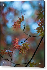 Delicate Signs Of Autumn Acrylic Print by Mike Reid