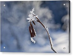 Delicate Winter Acrylic Print by Mike  Dawson