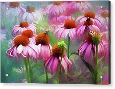 Acrylic Print featuring the digital art Delightful Coneflowers by Diane Schuster