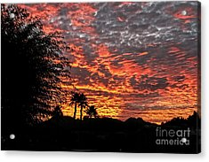 Acrylic Print featuring the photograph Delightful Evening by Robert Bales