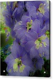 Delphinium Blues Acrylic Print