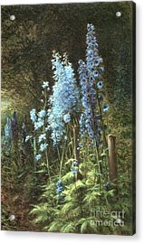 Delphiniums In A Wooded Landscape Acrylic Print