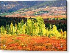 Denali Autumn Tundra Acrylic Print