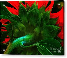 Acrylic Print featuring the photograph Derriere by Elfriede Fulda