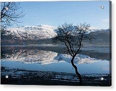 Derwentwater Tree View Acrylic Print