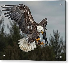 Descending Eagle Acrylic Print