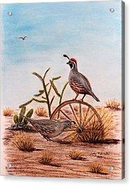 Desert Art Gambels Quail Acrylic Print